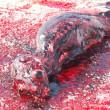 Tko ubija bebe tuljana i zašto?