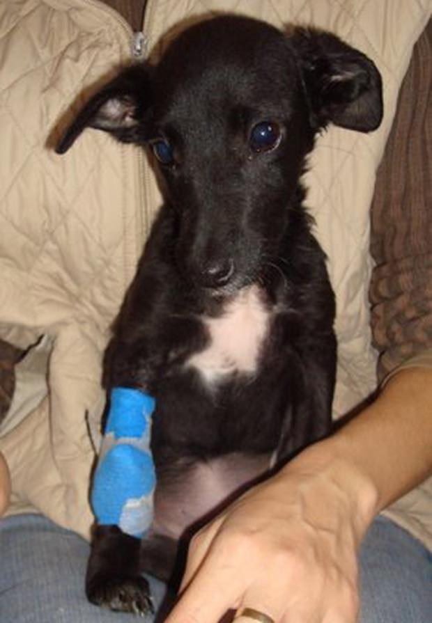 Lola na liječenju