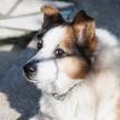 Najbolji pas na svijetu