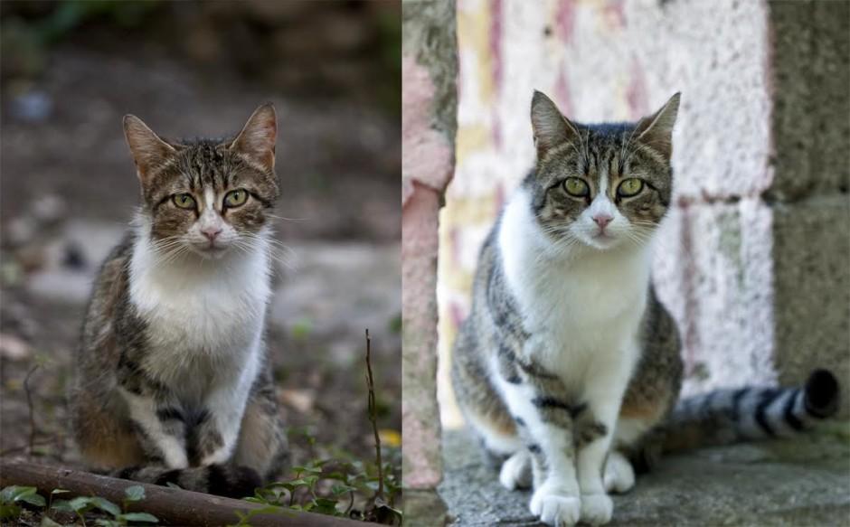 aks prije i poslije