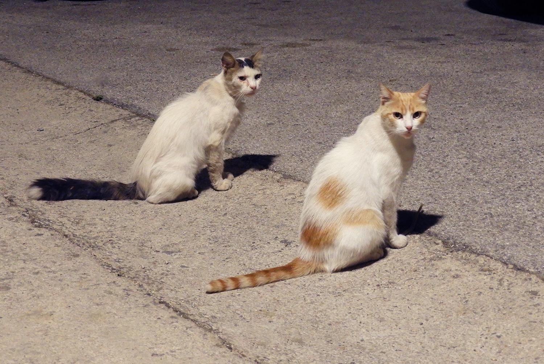 mali pas ulični mačak i princeza mačka