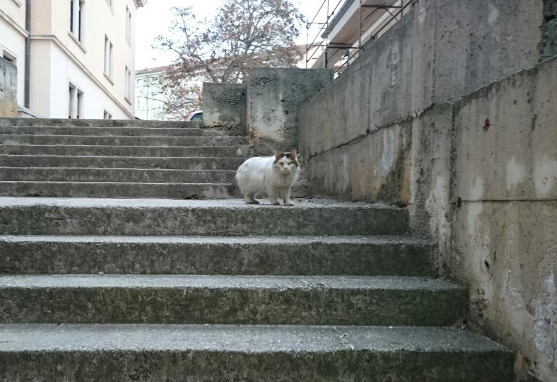 Mali pas ulični mačak