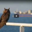 Migracije ptica